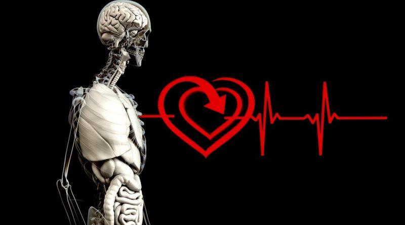 Srdce máme jenom jedno. Seznamte se s ním více